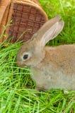 Coniglietto di pasqua con la merce nel carrello delle uova Fotografie Stock Libere da Diritti