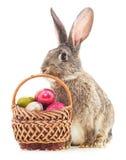 Coniglietto di pasqua con le uova colorate Fotografia Stock