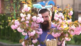 Coniglietto di pasqua con le uova di Pasqua Coniglio di coniglietto divertente sul fondo di fioritura della molla Cercare uovo e  archivi video