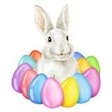 Coniglietto di pasqua con le uova di Pasqua Illustrazione dell'acquerello Fotografia Stock Libera da Diritti