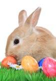 Coniglietto di pasqua con le uova di Pasqua su erba Immagini Stock Libere da Diritti