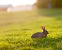 Coniglietto di pasqua nel prato Fotografie Stock Libere da Diritti