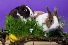 Coniglietto di pasqua nell'erba Fotografie Stock