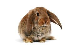 Coniglietto di pasqua su priorità bassa bianca Fotografie Stock Libere da Diritti