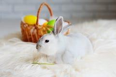 Coniglietto di pasqua su un fondo delle uova di Pasqua colorate Fotografie Stock