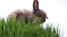 Coniglietto di pasqua sull'erba verde della molla video d archivio