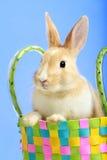 Coniglietto di pasqua in un cestino Fotografia Stock