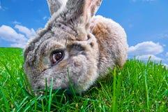 Coniglietto divertente Fotografia Stock Libera da Diritti