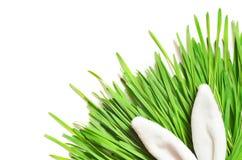 Coniglietto divertente di Pasqua su erba verde Priorità bassa di Pasqua immagini stock libere da diritti