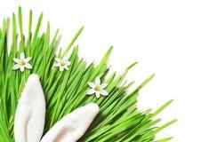 Coniglietto divertente di Pasqua su erba verde Priorità bassa di Pasqua fotografie stock