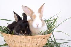 Coniglietto due in cestino fotografia stock libera da diritti