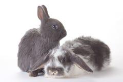 Coniglietto due, isolato Fotografie Stock Libere da Diritti