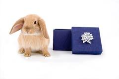 Coniglietto e un contenitore di regalo Fotografia Stock Libera da Diritti