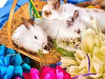 Coniglietto ed uovo di pasqua Coniglio del gruppo fra i fiori di festa della molla Fotografia Stock