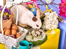 Coniglietto ed uovo di pasqua Coniglio fra i fiori di festa della molla Fotografia Stock