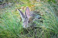 Coniglietto in erba Fotografie Stock