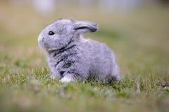 Coniglietto grigio nel giardino fotografia stock