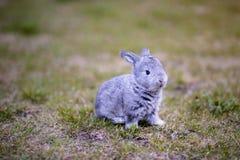 Coniglietto grigio nel giardino immagine stock libera da diritti