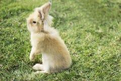 Coniglietto lanuginoso Fotografia Stock