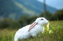 Coniglietto nel campo Fotografie Stock Libere da Diritti