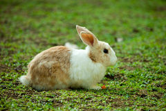 Coniglietto nel giardino Fotografia Stock Libera da Diritti