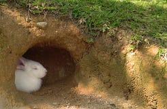 Coniglietto nel paese Fotografia Stock
