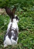 Coniglietto nell'erba Fotografie Stock