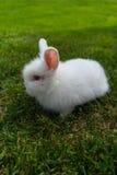 Coniglietto nell'erba Immagine Stock