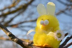 Coniglietto orientale immagini stock libere da diritti