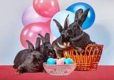 Coniglietto quattro vicino alle uova di Pasqua sui precedenti dei palloni fotografia stock libera da diritti