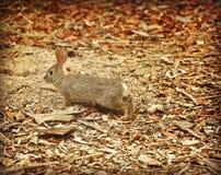 Coniglietto selvaggio del coniglio fotografie stock libere da diritti