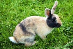 Coniglietto sveglio fotografia stock libera da diritti