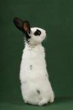 Coniglietto sveglio immagini stock
