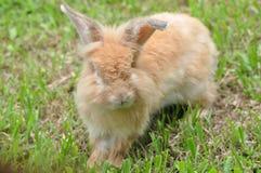 Coniglietto sveglio Fotografie Stock Libere da Diritti