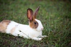 Coniglietto sveglio nel giardino Fotografia Stock