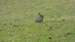 Coniglietto in un campo tutto del bambino da solo fotografia stock libera da diritti