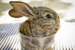 Coniglietto in un vetro Fotografie Stock Libere da Diritti