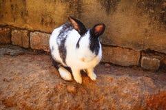 Coniglio all'aperto vicino alla parete immagine stock libera da diritti