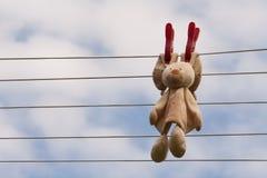 Coniglio all'essiccamento Fotografie Stock Libere da Diritti
