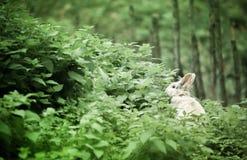 Coniglio bianco Fotografie Stock