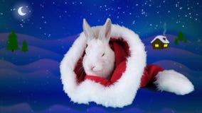 Coniglio bianco che mangia l'insalata nel cappello di Santa, fondo della rucola di notte di inverno stock footage
