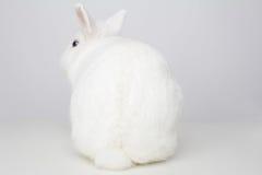 Coniglio bianco da dietro Fotografia Stock Libera da Diritti