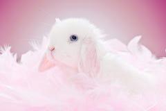Coniglio bianco del bambino Immagine Stock
