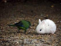 Coniglio bianco del bambino Fotografia Stock