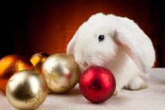 Coniglio bianco di nuovo anno sulla priorità bassa dell'indicatore luminoso arancione Immagine Stock