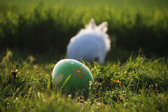 Coniglio bianco di Pasqua su erba verde Fotografia Stock Libera da Diritti