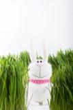 Coniglio bianco in erba Fotografia Stock Libera da Diritti