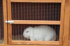 Coniglio bianco ingabbiato Fotografie Stock