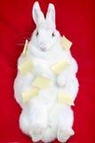 Coniglio bianco isolato su un rosso nelle note appiccicose Immagini Stock