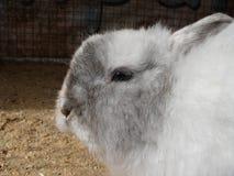 Coniglio bianco sveglio Immagini Stock Libere da Diritti